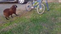 让你骑自行车,撞死你丫的