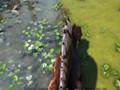 【默寒|粉字|菜鸽子|贝鲁达】《方舟:生存进化》多人联机 #22【3个龙骑兵勇闯红树林偶遇腾讯QQ】(Ark:Survival Evolved)
