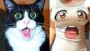 【萌星人de那些破事37】成精!自带表情包的动物