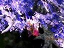 [游侠网]《最终幻想10/10-2》高清版角色预告片 - 艾恩