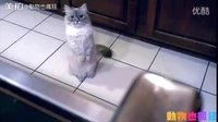 猫咪遇上狗,以惊人速度落跑,是猫界短跑第一名无误