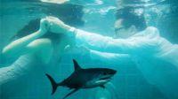 【笑弹计划85】海底求婚遇鲨鱼,心疼了我的哥