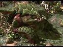 《星际争霸2:虫群之心》 娱乐解说-10