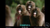 地球上最怪异的5种灵长类动物