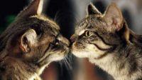 动物也有爱情,喵星人与相恋四年的情人分离,场面让人感动