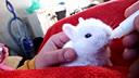 萌炸了!给初生两周的小兔子喂奶