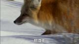 【玩电影配音团】动物搞笑配音第1集