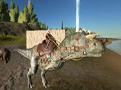 【默寒|粉字|菜鸽子|贝鲁达】《方舟:生存进化》多人联机 #18【探索雪山与浮岛矿洞】(Ark:Survival Evolved)