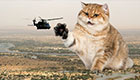 蜜汁反差萌扑面而来 当巨大萌猫乱入军事照片
