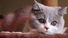 科普顺便云吸猫:权威研究称撸猫缓解老年痴呆