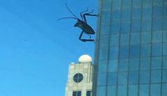 巨型昆虫入侵地球了?13张误导你眼睛的神奇照片!