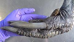 最危险鸟类的爪子好可怕!9张震撼你的真实照片