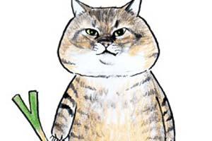 """推特人气漫画猫咪""""つしま""""真的存在!本体也超霸气"""