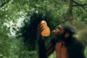 《祖先人类史诗》中字预告 没有小地图全凭玩家探索!