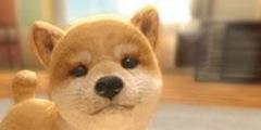 《小小伙伴 :狗狗&猫猫》NS繁体中文版今日发售!