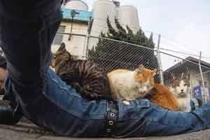 水沟里脏快上来 日本摄影师拍摄街边萌态百出流浪猫