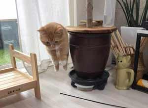 猫咪照片没跃动感怎么办?P上《合金装备》气球回收