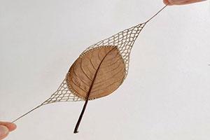 脆弱腐朽重获新生 落叶结合绳线编制化身精美艺术品
