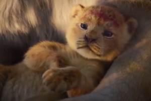 《狮子王》幼崽辛巴原型小狮子:好萌的一只