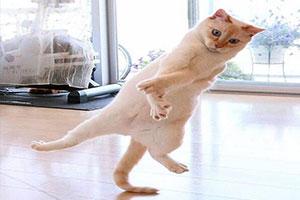 """""""20张简笔的猫""""!不要怀疑 没有喵们办不到的姿势"""