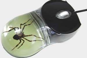 惊了!鼠标透明外壳里竟有巨大的蜘蛛 这谁敢用啊!