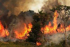 """""""地球之肺""""已经烧了仨礼拜!网友喊话贝索斯去救火"""