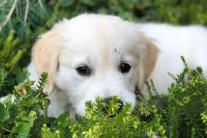 国际爱狗日福利!游戏厂商发推展示他们可爱的狗狗!