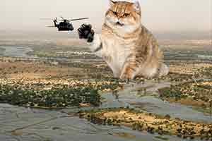 蜜汁反差萌撲面而來 當巨大萌貓亂入硬核軍事照片