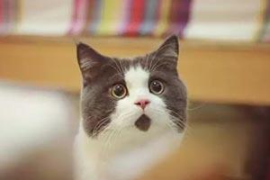 科普順便云吸貓:權威機構研究稱擼貓可緩解老年癡呆