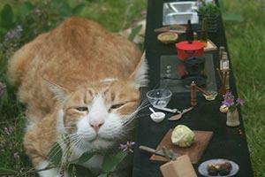 藝術家的含淚辛酸史:貓皇霸氣一坐毀光「袖珍小鎮」