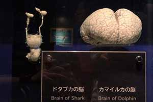 鲨鱼大脑 VS 海豚大脑!12张神奇的照片让你涨知识!