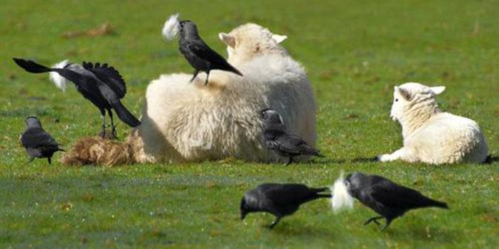 带粉丝薅羊毛导致果农闭店:看不见的恶,还有多少?