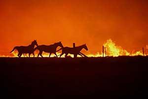 澳洲大火4个月后,摄影师拍下这些'奇迹'照片充满希望