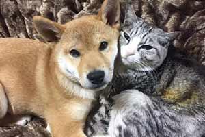 日本养猫大户抱了只小奶狗回家 画风逗趣萌翻众人!