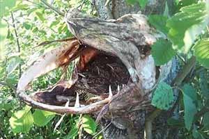 死尸头骨里竟然有活鸟!29张惊悚恐怖的大自然照片