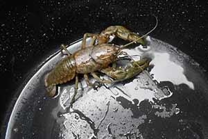 小龙虾竟然统治地球了?23张让人不可思议的巧合照片