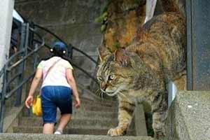 楼梯惊现超巨型大猫!18张毫无PS的神奇错觉照片!