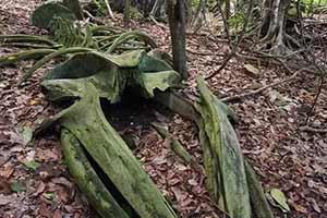 热带雨林惊现鲸鱼尸骨!27张千年一遇的神奇巧合照片