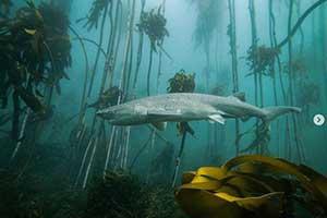 《黑暗之魂》灰烬湖惊现人间!21张神奇的大自然照片
