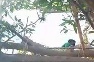 三哥又开挂,爬到树上自我隔离 轻松一刻4月7日晚间版