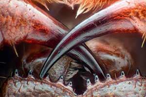 蜈蚣毒牙/鲨鱼卵/猫舌头的倒刺!神奇的动物特写照片