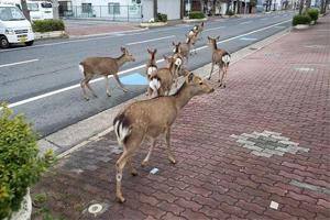 """人类消失之后 动物纷纷现身城市街头""""占城为王"""""""