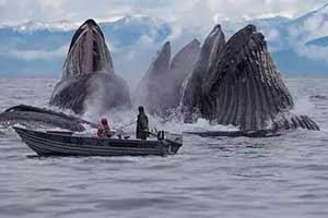 小船周围跳出巨大鲸鱼群!22张罕见的神奇事物照片