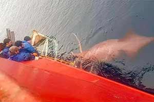 渔船下惊现肉色乌贼水怪!24张大开眼界的神奇照片!