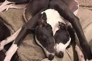 《生化危机》双头犬惊现人间?23张错觉照片大揭秘!