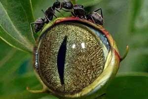 生化危机G病毒眼睛惊现人间?神奇的涨知识照片来啦!