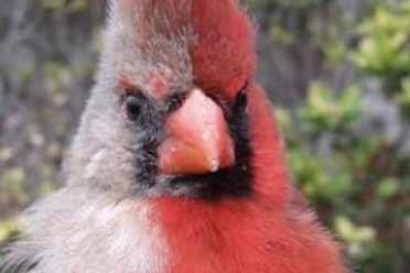 雌雄同体的动物真是太骚了!19张大开眼界的惊奇照片