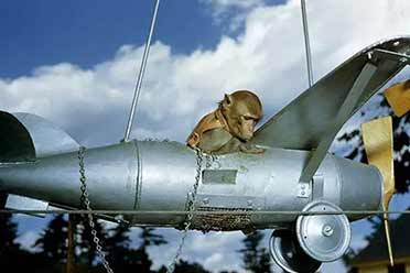 """1951年的猴子竟会""""驾驶""""飞机?15张罕见历史照片"""