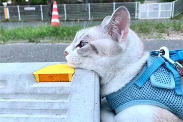 猫的头有千斤重?在停车场趴睡的喵星人的萌照欣赏
