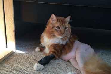 脱了裤子的猫好喜感!动物们出糗的瞬间让人嘴角失守